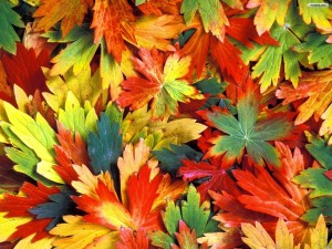 colorful-autumn-leaves-wallpaper-autumn-leaves-wallpaper